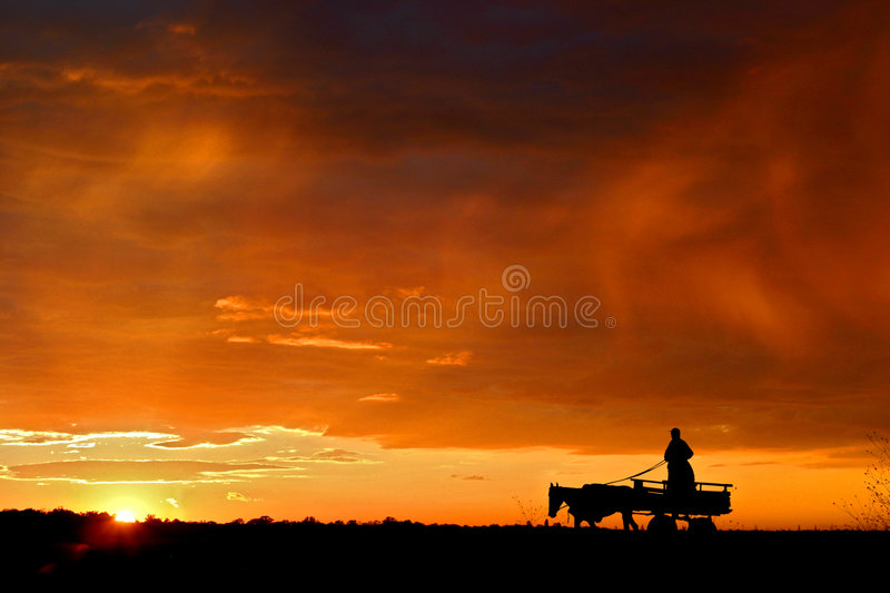 Carriage on the field royalty free stock photo