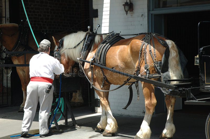 Download Carriage Horse Charleston stock photo. Image of horses - 1052414