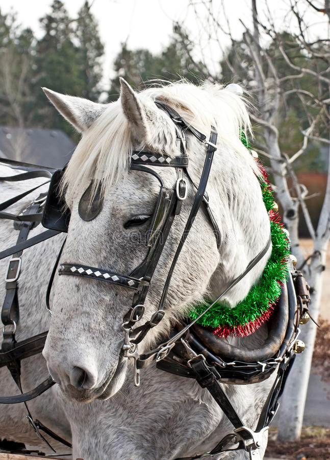 Download Carriage Horse In Holiday Parade Stock Image - Image: 22391905