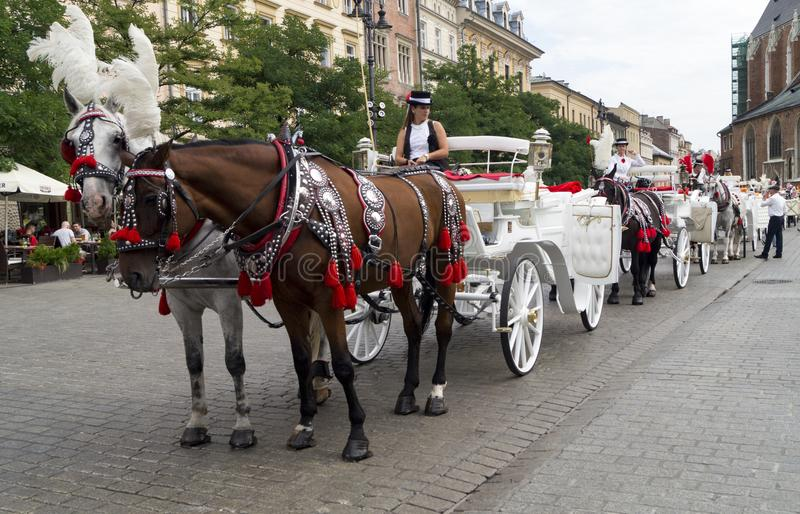 Carriage with horses in Krakow square royalty free stock images