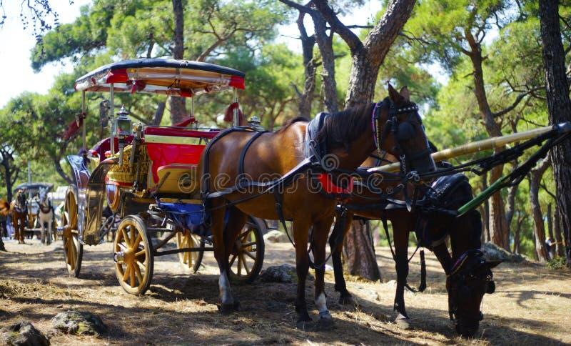 Carriage horses princess island Istanbul Turkey stock photography