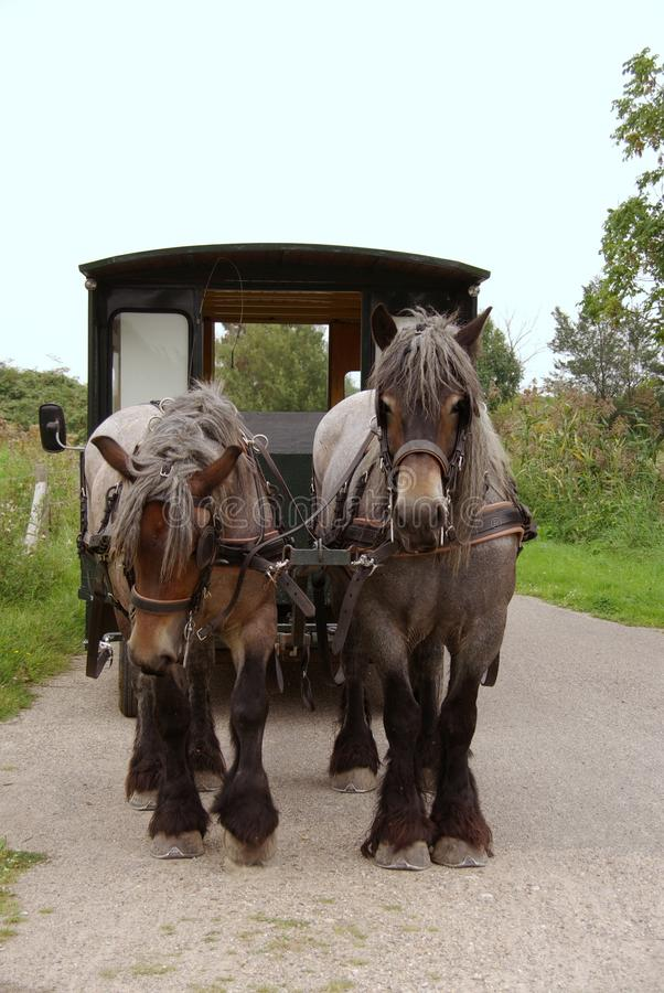 Download Carriage and pair stock image. Image of outside, fauna - 22117761