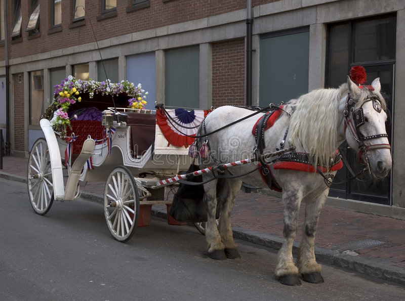 Download Carriage ride stock photo. Image of drawn, flowers, equus - 23224