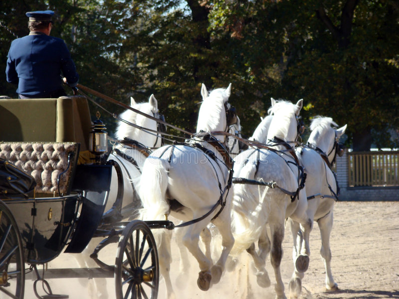 Carriage and white six stock image