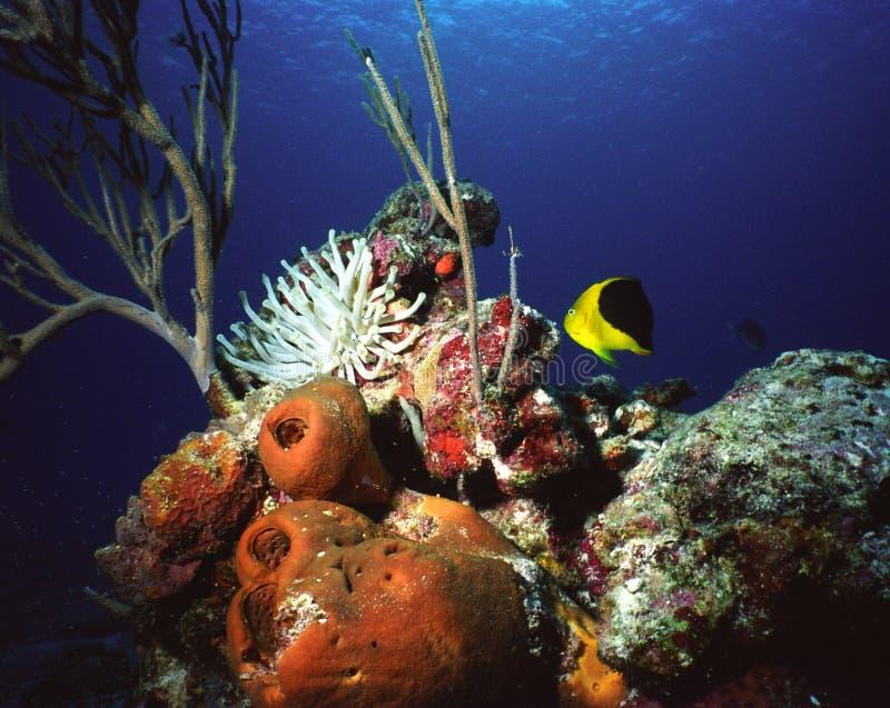 carribean珊瑚礁 库存照片