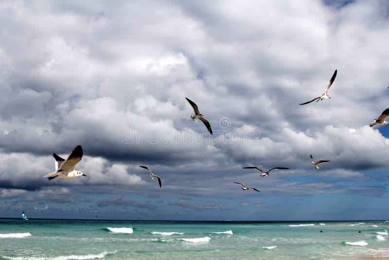 Carribean sea landscape royalty free stock photography