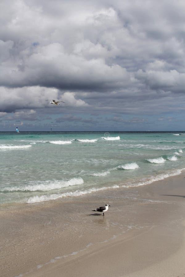 Carribean sea landscape stock photos