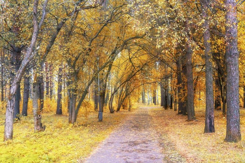 Carril de la calzada a través del bosque hermoso de la caída en parque foto de archivo libre de regalías