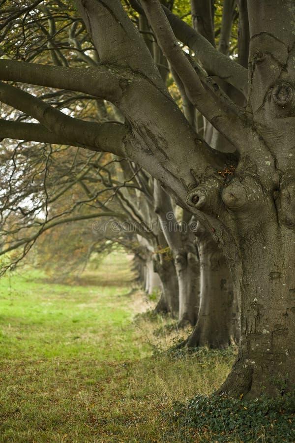 Carril del arbolado en otoño fotografía de archivo libre de regalías