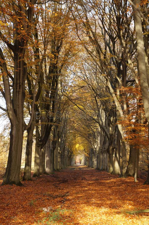 Carril del bosque en otoño fotografía de archivo libre de regalías