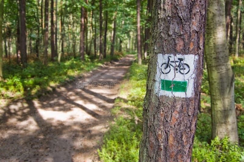 Carril del ciclo que lleva a través del bosque foto de archivo libre de regalías