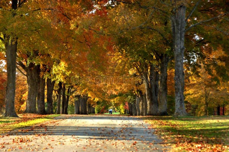 Carril del otoño imagenes de archivo
