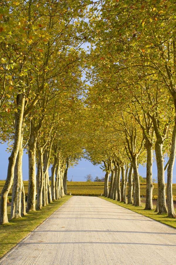 Download Carril del otoño foto de archivo. Imagen de sunset, callejón - 7279910