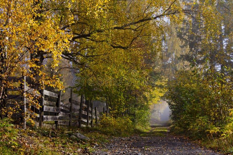 Carril del país con los árboles de hojas caducas en colores del otoño imagen de archivo libre de regalías