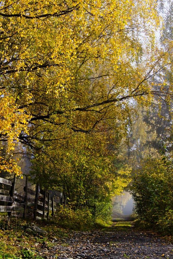 Carril del país con los árboles de hojas caducas en colores del otoño fotografía de archivo libre de regalías