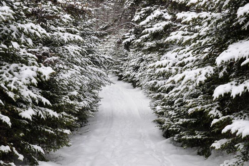 Carril hivernal foto de archivo