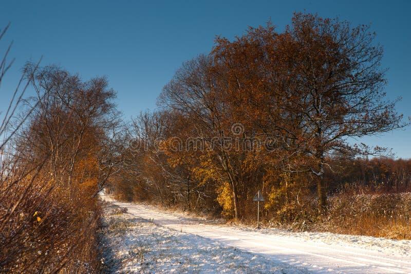 Carril nevado en invierno imagen de archivo libre de regalías
