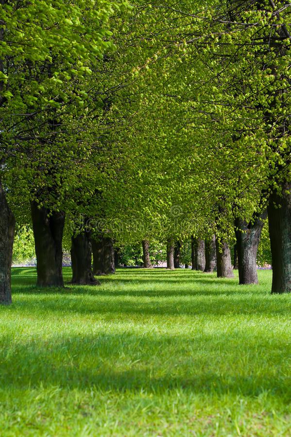 Carril Verde En El Parque Fotos de archivo libres de regalías