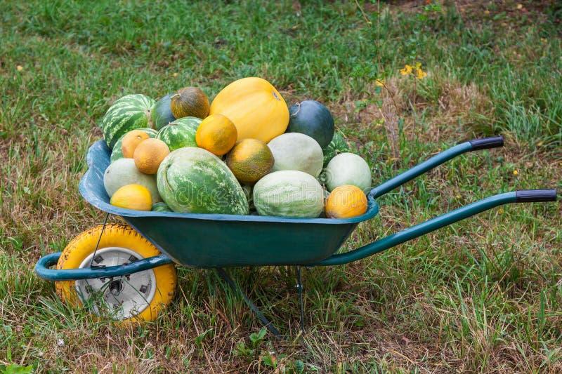 Carrinho de mão com a colheita recentemente colhida fotos de stock royalty free