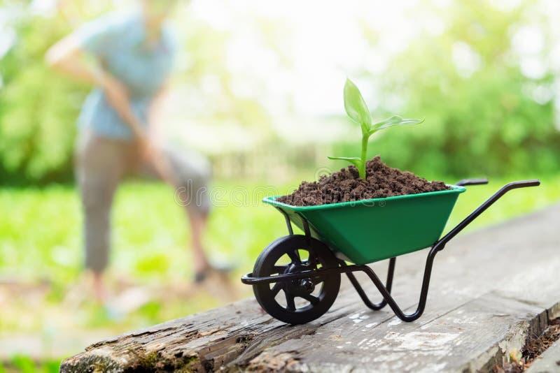Carrinho de mão com plântula crescente Mulher que trabalha no jardim no fundo imagem de stock royalty free