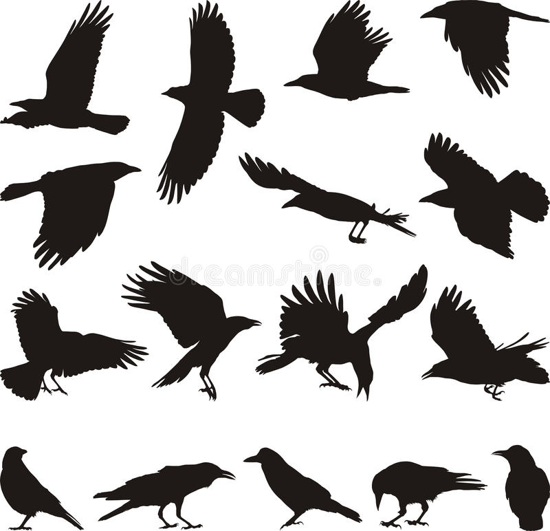 Download Carrion crow stock vector. Image of silhouette, flying - 13582392