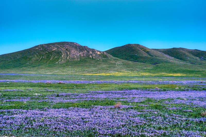 Carrizo Plains. At twilight in California royalty free stock photos