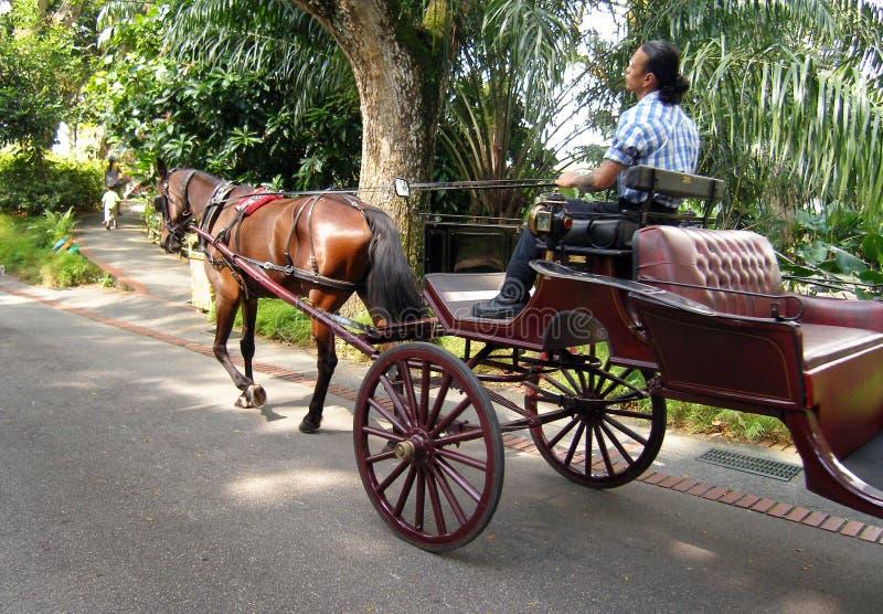 Carro abierto traído por caballo, parque zoológico imágenes de archivo libres de regalías