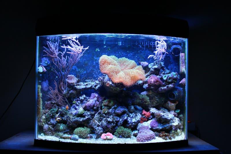 Carro armato dell'acquario della barriera corallina fotografie stock libere da diritti