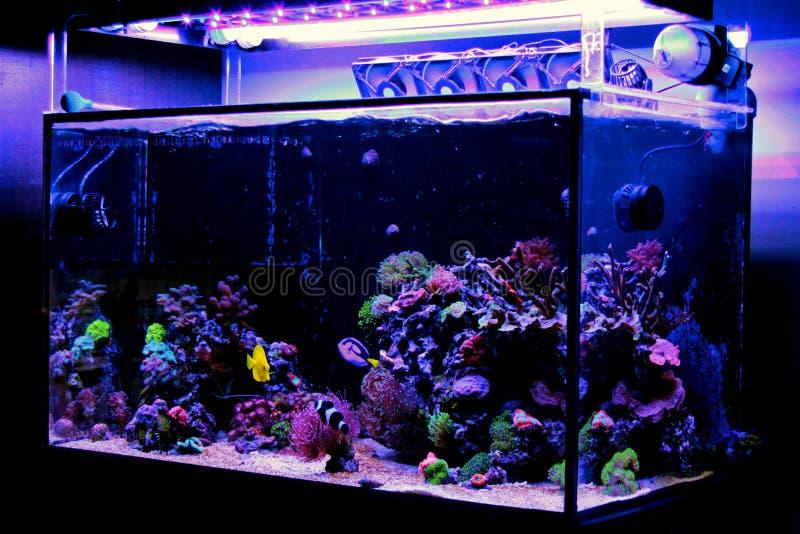 Carro armato dell'acquario della barriera corallina dell'acqua salata immagine stock libera da diritti