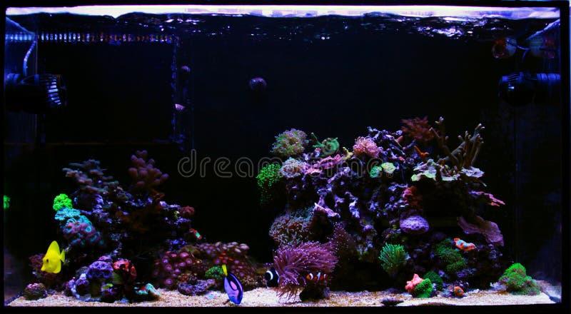 Carro armato dell'acquario della barriera corallina dell'acqua salata fotografie stock