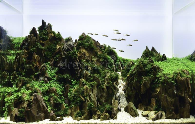 carro armato dell'acquario di stile della natura con le piante acquatiche immagine stock