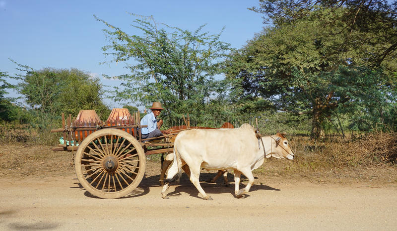 Carro birmano del buey del montar a caballo del hombre en la ciudad antigua en Bagan imágenes de archivo libres de regalías