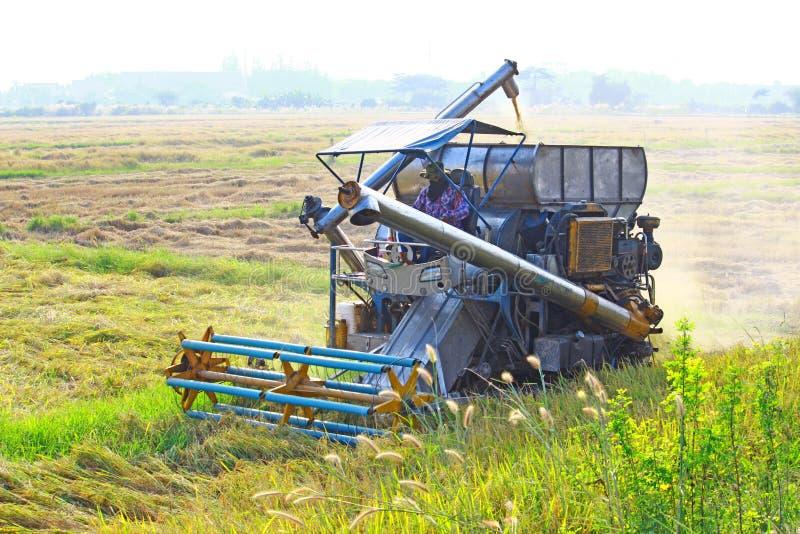 Carro da colheita no campo do arroz fotos de stock royalty free