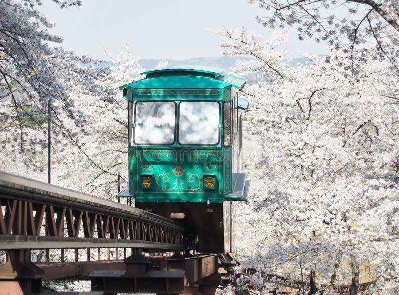 Carro da inclinação que passa através do túnel da flor de cerejeira (Sakura) fotos de stock royalty free