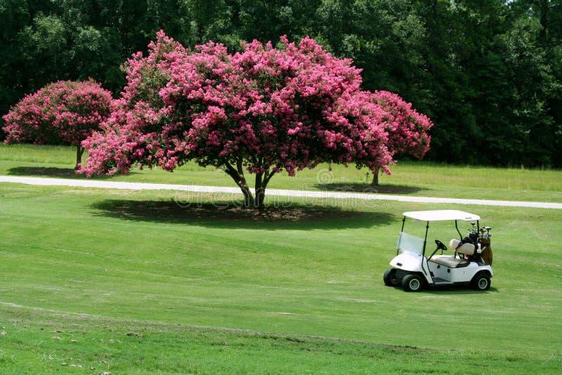Carro de golfe pelo Crepe Myrtle fotos de stock royalty free
