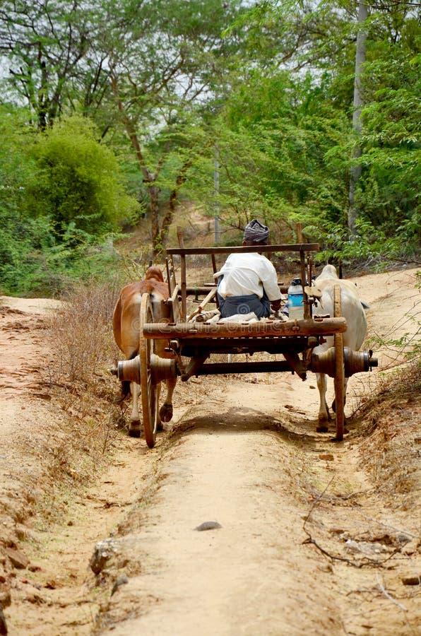 Carro de la vaca de la gente que monta birmana fotos de archivo