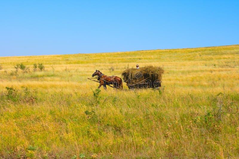 Carro del caballo imagen de archivo libre de regalías