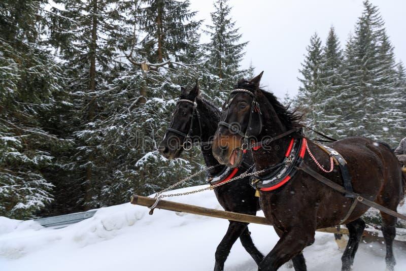 Carro del caballo en bosque fotografía de archivo libre de regalías