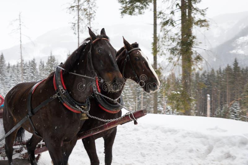 Carro del caballo en montañas foto de archivo libre de regalías