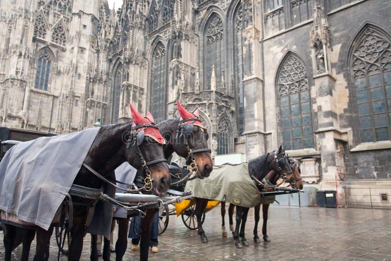 Carro del caballo en Viena, Austria fotografía de archivo libre de regalías