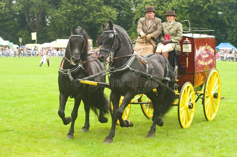 Carro desenhado por pares de cavalos. fotos de stock royalty free