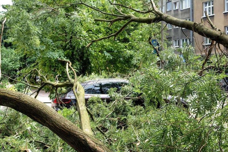 Carro destruído por uma árvore caída durante o furacão fotografia de stock royalty free