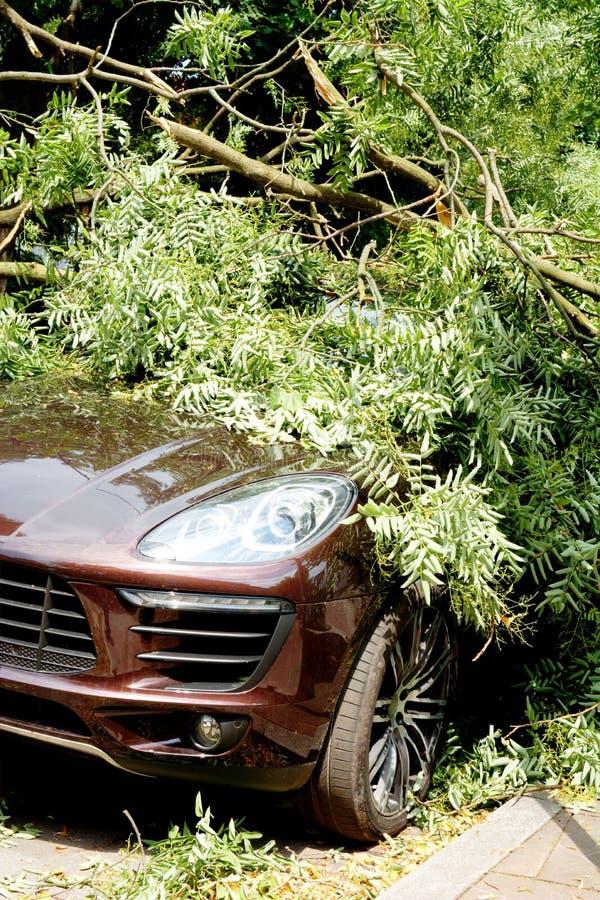 Carro destruído por uma árvore caída durante o furacão foto de stock