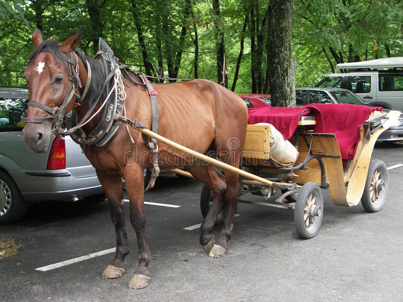 Carro do cavalo imagem de stock