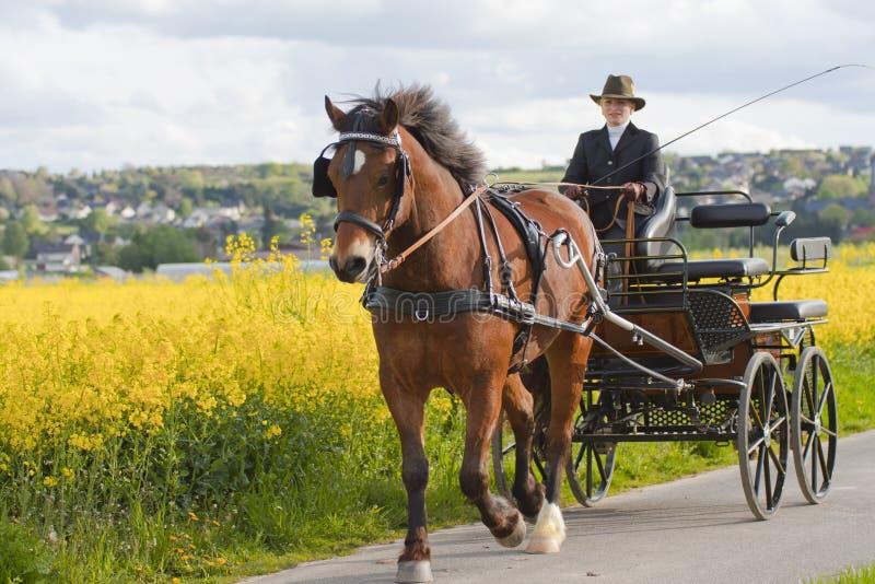 Carro do cavalo da mulher foto de stock