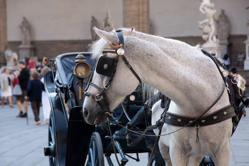 Carro do cavalo na praça imagem de stock royalty free