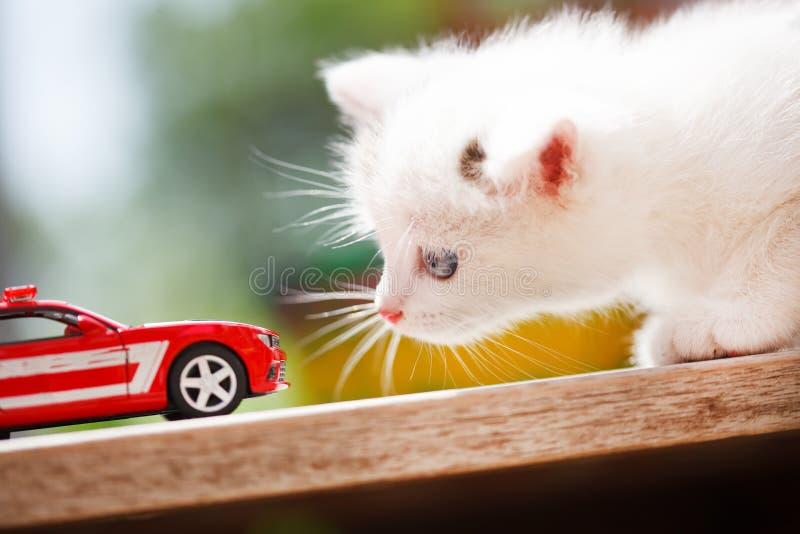 Carro do gatinho e do brinquedo foto de stock royalty free