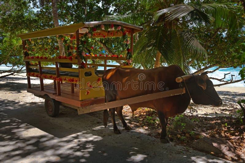 Carro para la ceremonia de boda - Seychelles del búfalo imágenes de archivo libres de regalías