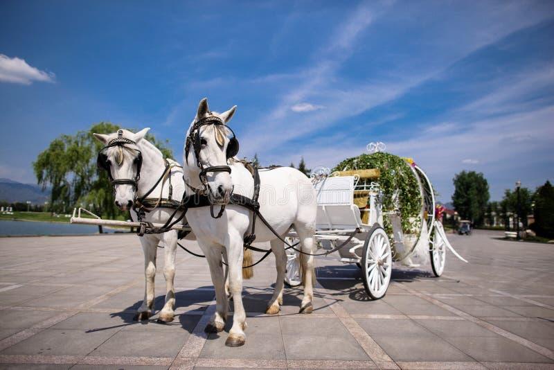 Carro traído por caballo imagen de archivo