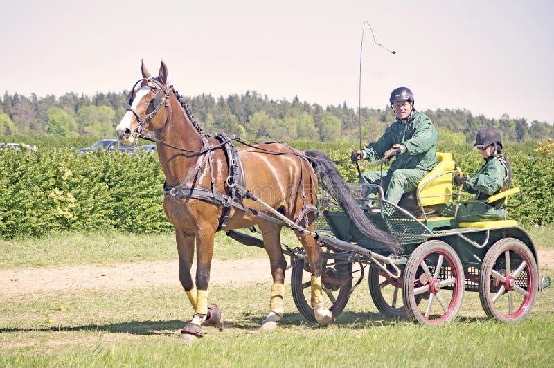 Carro traído por caballo de la cervecería del deporte imágenes de archivo libres de regalías
